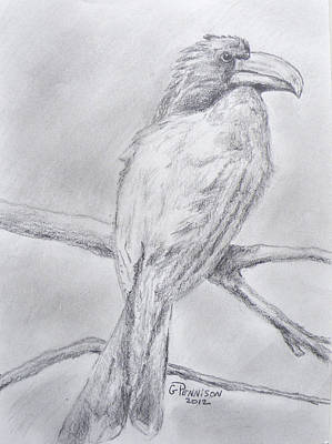 Hornbill Drawing - Crowned Hornbill by Gilbert Pennison