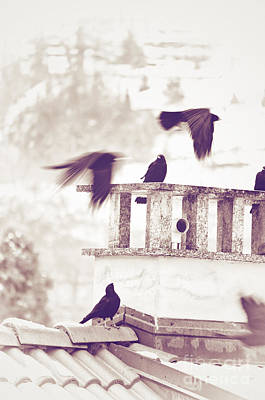 Crows On A Roof Print by Silvia Ganora