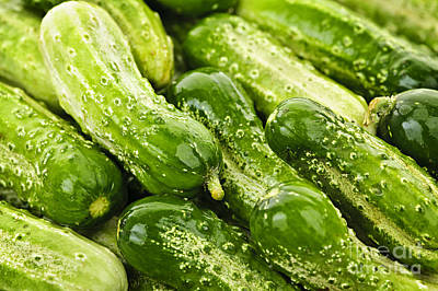 Cucumber Photograph - Cucumbers  by Elena Elisseeva