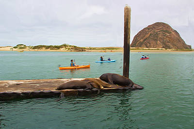 Curious About Sea Lions Print by Heidi Smith