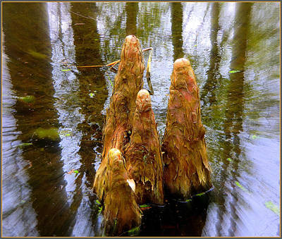 Cypress Family Of Monks Print by Mindy Newman