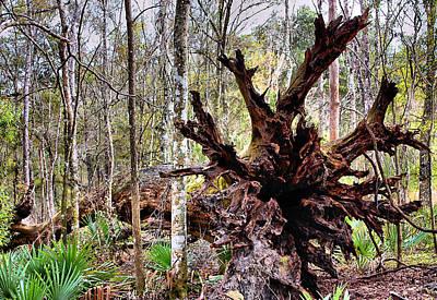 Cypress Roots Print by Kristin Elmquist