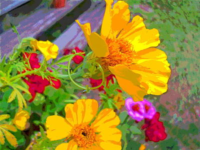 Sun Porch Photograph - Cypress Vine And Flowers By Porch Steps by Padre Art