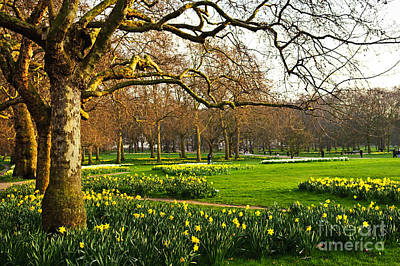 Natural Wood Photograph - Daffodils In St. James's Park by Elena Elisseeva