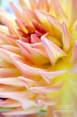 Dahlia Flower 13 Print by Nailia Schwarz
