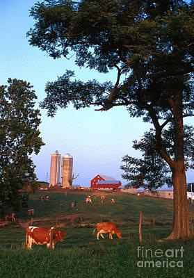 Dairy Farm Print by Photo Researchers