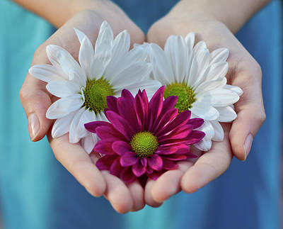 Daisies In Child Hands Print by Natalia Ganelin