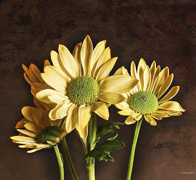 Daisy Chains Print by Peter Chilelli