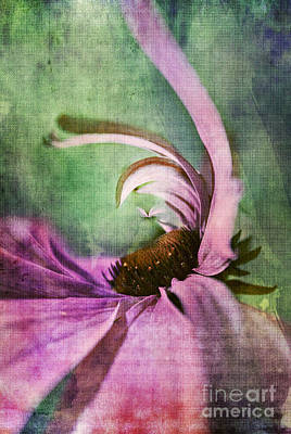 Distortion Digital Art - Daisy Fun - A01v042t05 by Variance Collections