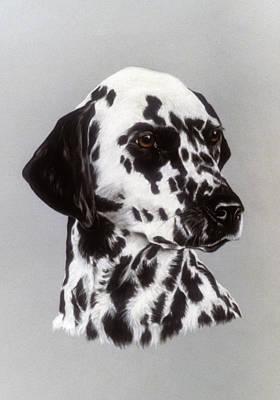 Dalmatian Print by Patricia Ivy