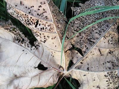 Photograph - Danada Leaf by Todd Sherlock