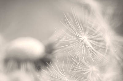 Dandelion Flower Print by Ceca Photography