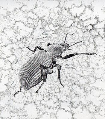 Darkling Bug Print by Inger Hutton