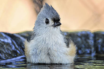 Titmouse Photograph - Day At The Spa by Bonnie Barry