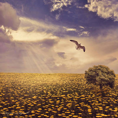 Flying Seagull Photograph - Daydream by Lourry Legarde