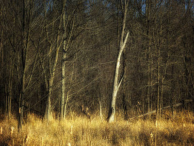 Deadwood Napanee Print by John Herzog
