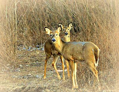 Deer Duo Print by Marty Koch