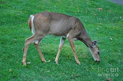 Lenora Berch Photograph - Deer Golf Course by Lenora Berch