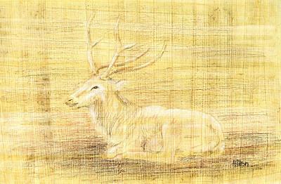 Color Pencil Drawing - Deer by Hakon Soreide