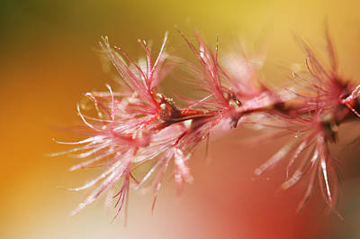 Delicacy. Natural Wonders. Macro Print by Jenny Rainbow
