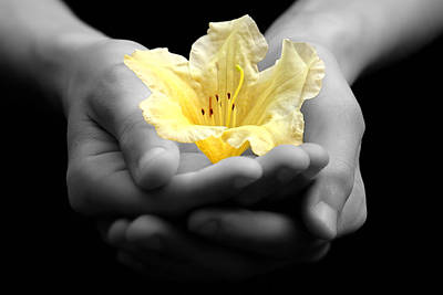 Of Hands Photograph - Delicate Yellow Flower In Hands by Tracie Kaska