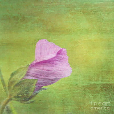 Square Flower Photograph - Deploiement - 01ct02b by Variance Collections