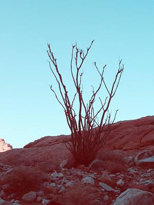 Desert Plant Print by Naxart Studio