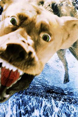 Diving Dog Photograph - Devil Dog by Jill Reger
