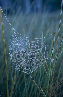 Trapeze Spider Photograph - Dew Drops Cling To A Spider Web by Jason Edwards