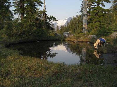 Dharma At The Pond Print by Shawn Hegan