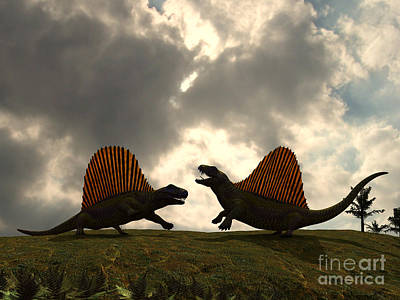 Dimetrodon Fight Over Territory Print by Walter Myers