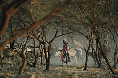 Dinka Photograph - Dinka Tribesmen And Their Cattle Escape by Randy Olson