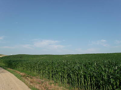 Dirt Road Cornfield Print by Brian  Maloney