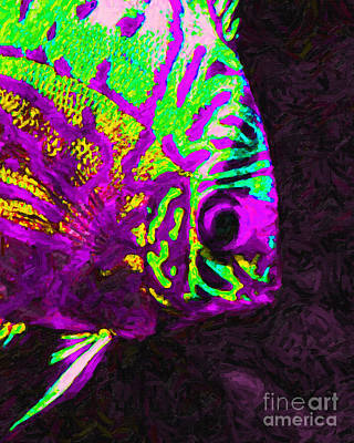 Discus Tropical Fish 2 Print by Wingsdomain Art and Photography