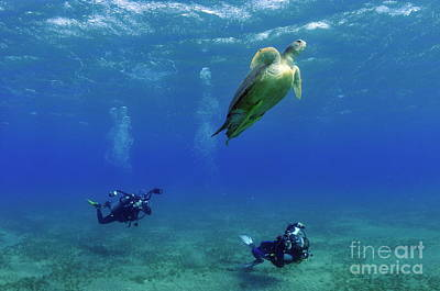 Divers Photographing Green Turtle Print by Sami Sarkis