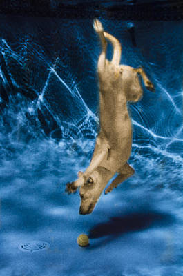 Diving Dog Photograph - Diving Dog 2 by Jill Reger