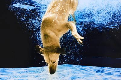 Diving Dog Photograph - Diving Dog 3 by Jill Reger