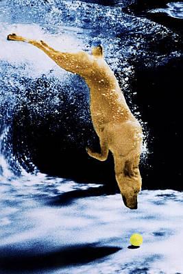 Diving Dog Photograph - Diving Dog by Jill Reger