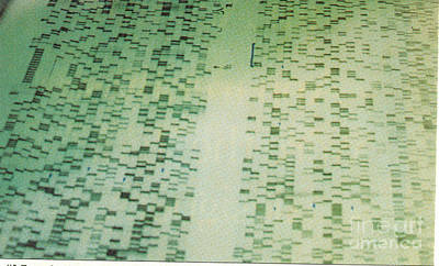Dna Sequencing Gel Print by Science Source