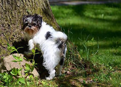 Dog And Tree Original by Jeffrey Platt