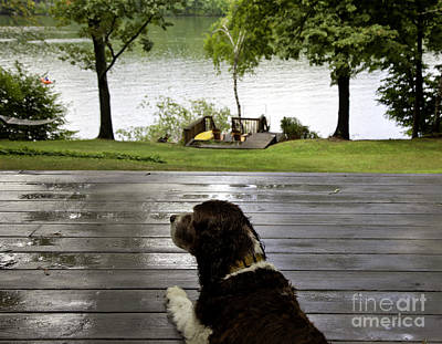 Rainy Day Photograph - Dog Day Afternoon by Madeline Ellis