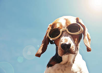 Dog In Goggles With Sun Flare Print by Darren Boucher