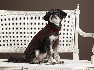 Dog In Sweater Sitting On Bench Print by Ryan McVay