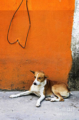 Dog Near Colorful Wall In Mexican Village Print by Elena Elisseeva