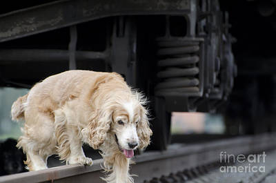 Dog Walking Under A Train Wagon Print by Mats Silvan