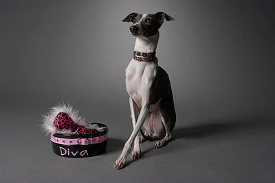 Dog With Diva Bowl Print by Chris Amaral