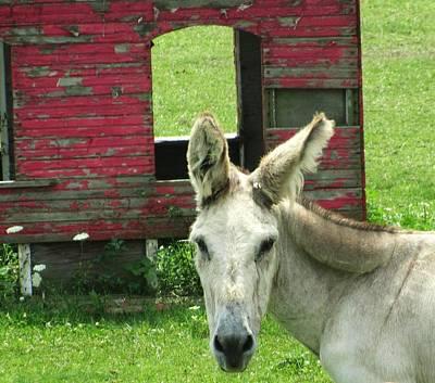Donkey Print by Todd Sherlock