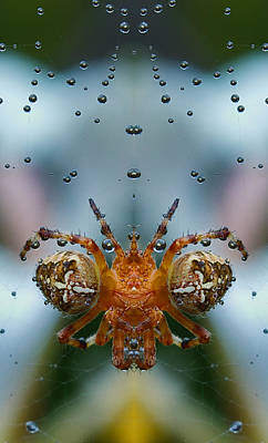 Manipulation Photograph - Double Spider by Jean Noren