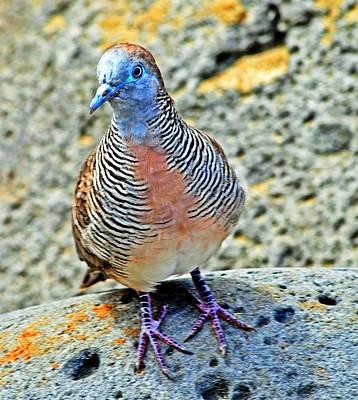 Birds Photograph - Dove by Danielle Del Prado