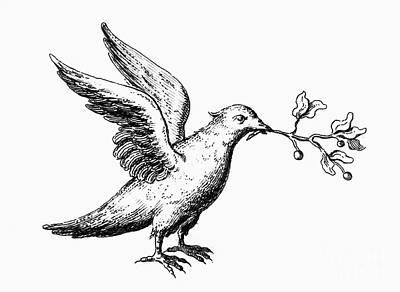 Dove: Noahs Ark Print by Granger